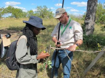 Hunting fungi in the Kruger National Park