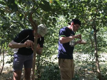 PSHB fungus tested for pathogenicity on commercial forest trees