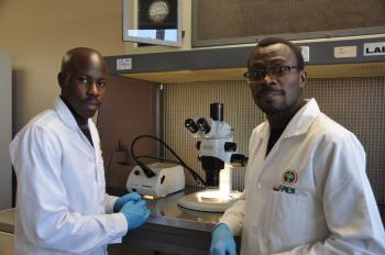 Kenyan student makes second lab training visit to FABI