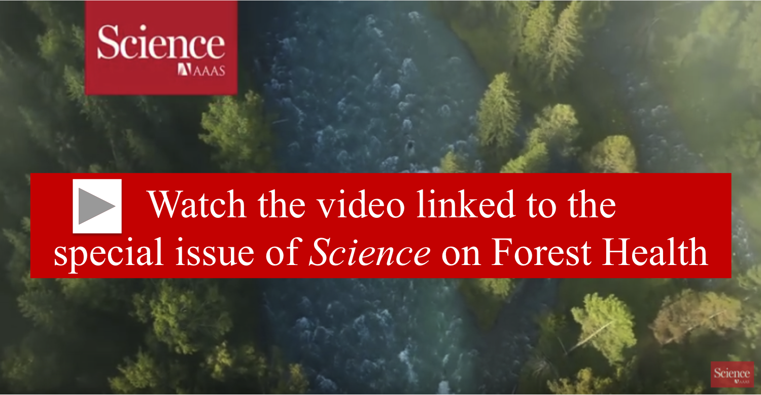 Science Forest Health video