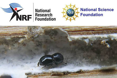 Bark Beetle Mycobiome Research Network Meeting